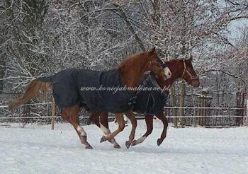 2010.01 - Zimowe kasztany