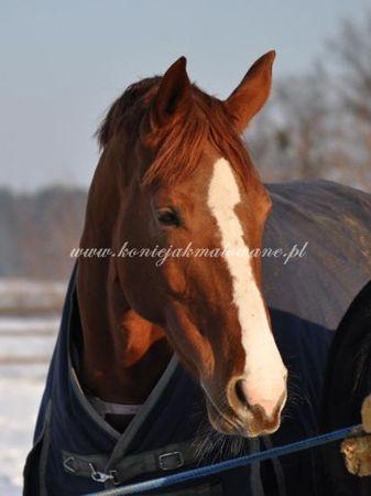 2011.01.05 - W zimowym słońcu