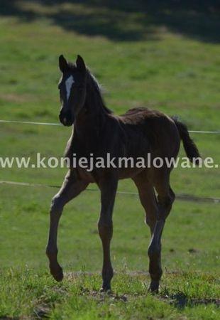 2012.05.31 Majowa Starling