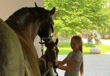 2018.07.21 Hanowerska wystawa Saheylu i Dracarys w Kunowie