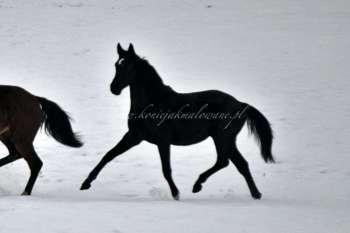 2021.04.01 Wielka, zimowa sesja młodzieży - Samedi i Twilight